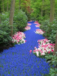 river of flower